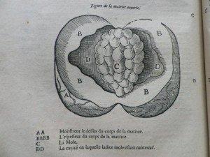 IMGP9186