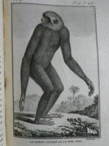 IMGP1747