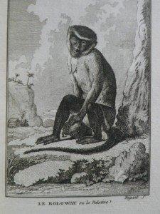 IMGP1781