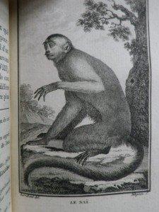 IMGP1802